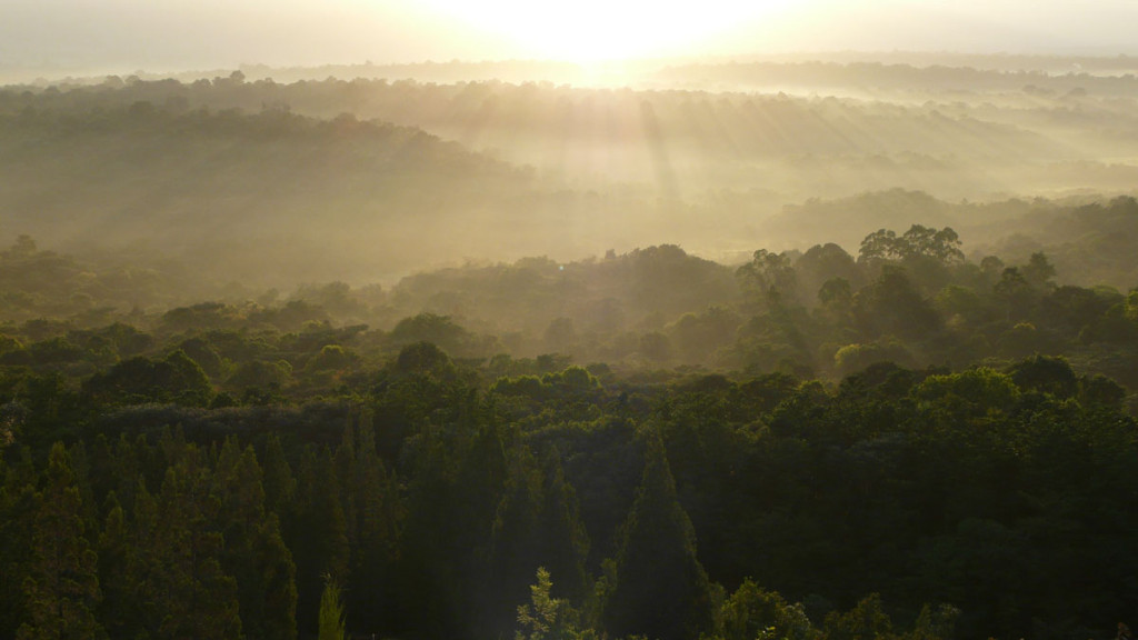 sunrise in kakamega national park, 2008