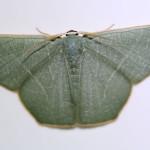 emerald, colombia, 2013