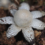 barometer earthstar, china, 2011