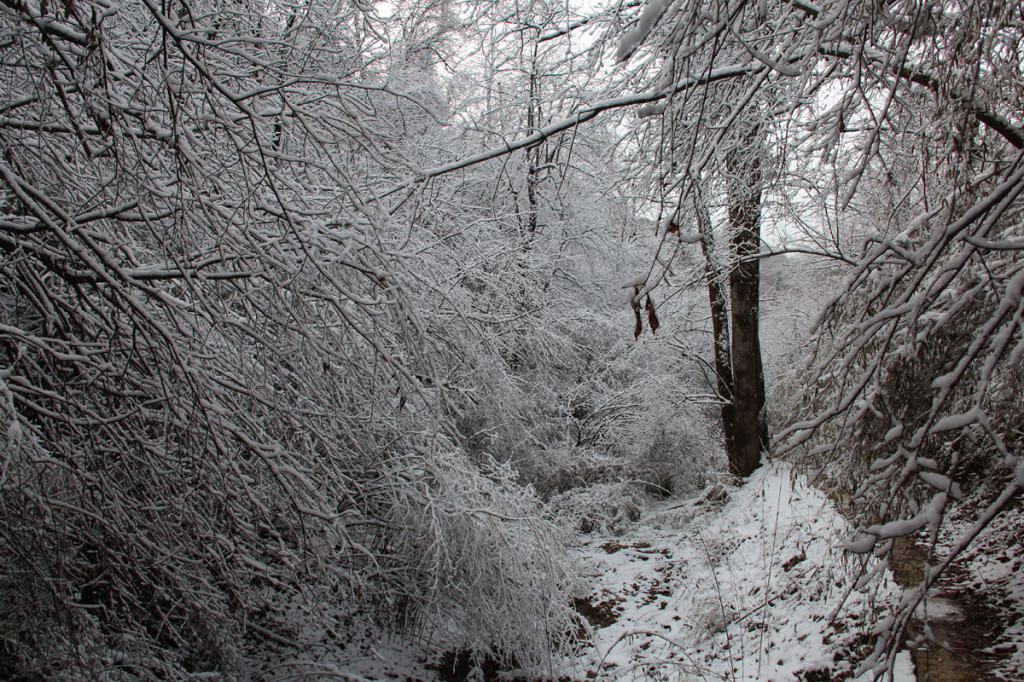 snow in foping nature reserve, china, 2011