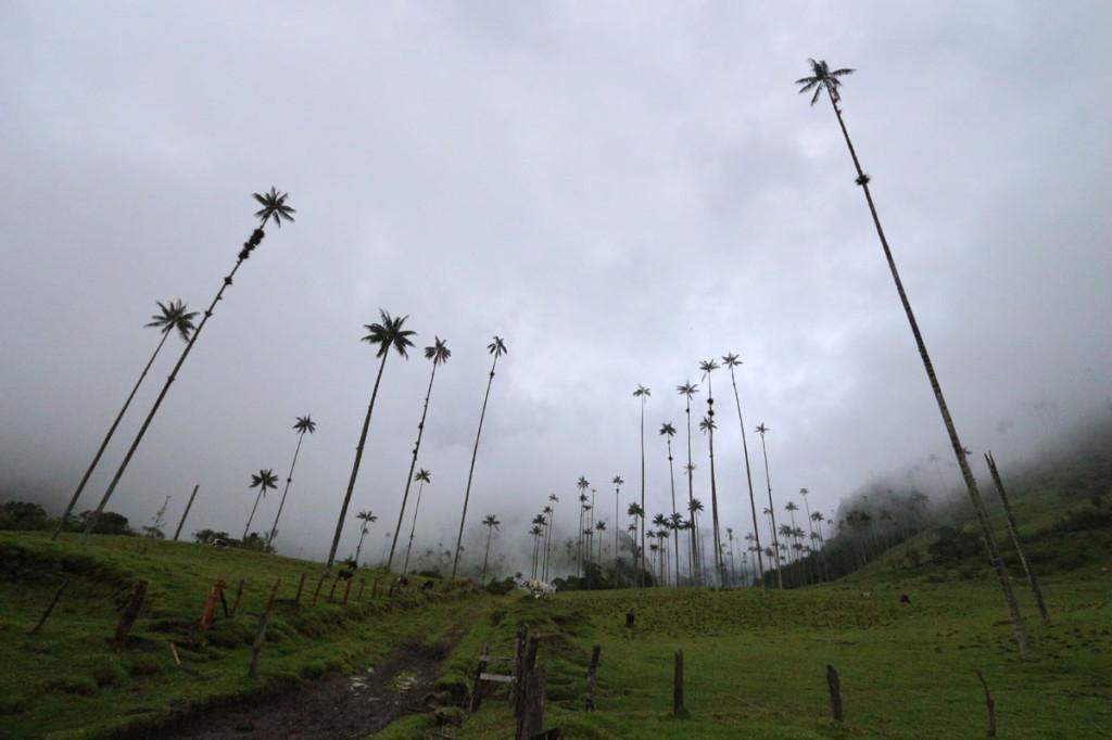 valle de cocora, colombia, 2012