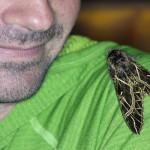 euryglottis sphinx, colombia, 2013