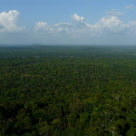 endless forest in iwokroma forest reserve, guyana, 2011