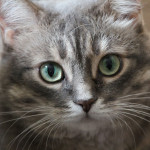 ravi, my first cat, sadly she passed away Aug/2013