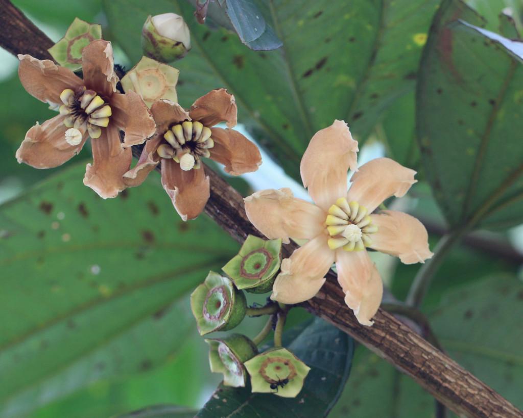 IMG_2567_flowercrop