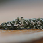 lichen caterpillar, china, 2012